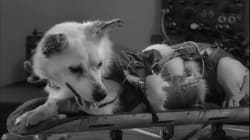 China también intentó enviar perros al