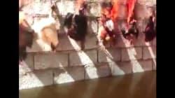Un artiste expose une vidéo de poulets brûlés vifs et scandalise les défenseurs des