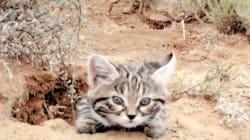 El gato más mortífero del mundo es absolutamente