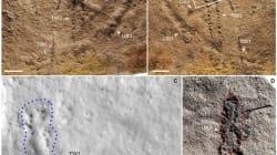 Les plus anciennes empreintes d'animaux de la planète ont été découvertes en