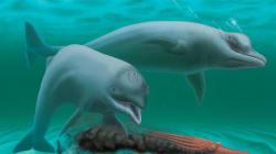 Un dauphin minuscule, sans dents et avec de la moustache a été