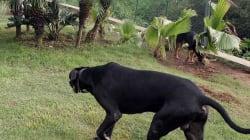 Sacrifican a los perros que mataron a las dos vecinas de Colmenar de Oreja