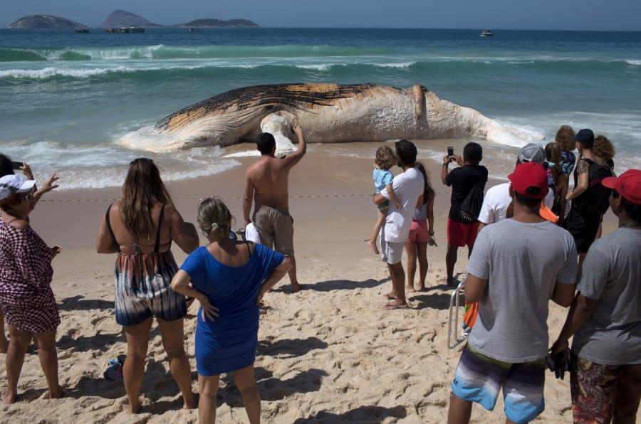 Baleia é encontrada morta em Ipanema.