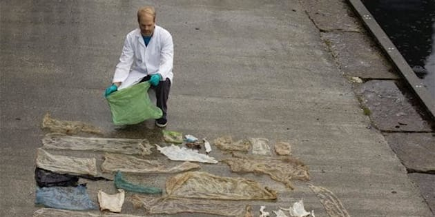 Scientist reveals the plastic bags pulled from the intestines of a beached goose-beaked whale in Norway.