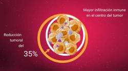 Científicos españoles descubren un virus que 'se come' los
