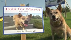 Extremely Good Boy Enters St. John's Mayoral
