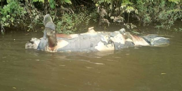 Los ríos de Tabasco han sido escenario de estas muertes de la fauna local.
