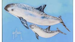 SeaWorld quiere salvar a la vaquita