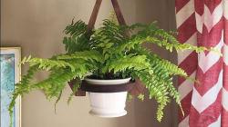 8 plantes à mettre dans votre chambre pour mieux