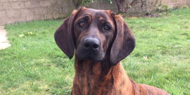 Onnie, la chienne des sapeurs-pompiers du Morbihan avait été volée dimanche 17 février.