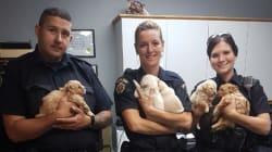 地下1メートル、深く土の中に埋まってしまった子犬 警察官によって救助される