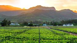 BLOGUE - Le groupe DGB, producteur important de vin d'Afrique du