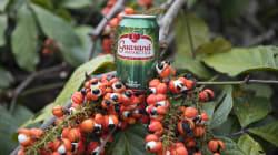 Da Amazônia à sua casa: Como é feito o refrigerante Guaraná