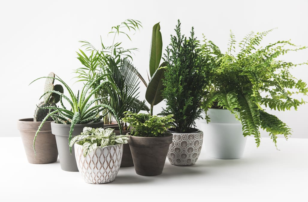 How to repot your plants so they grow to be strong and healthy