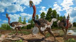 Ce nouveau dinosaure à plumes ressemble à une autruche