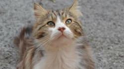 Des centaines de manifestants réclament justice pour Chevelu, un chat errant torturé à
