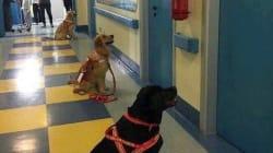 Terapia con perros: la foto que causa ternura en