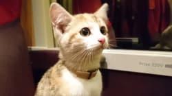 電車旅行の果てに…フランスの迷い猫、車掌の機転で飼い主見つかる