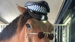 This NSW Police Officer Does Not Horse Around When It Comes To Speeding