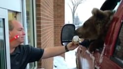 Ice Cream-Eating Bear Causes A Stir In