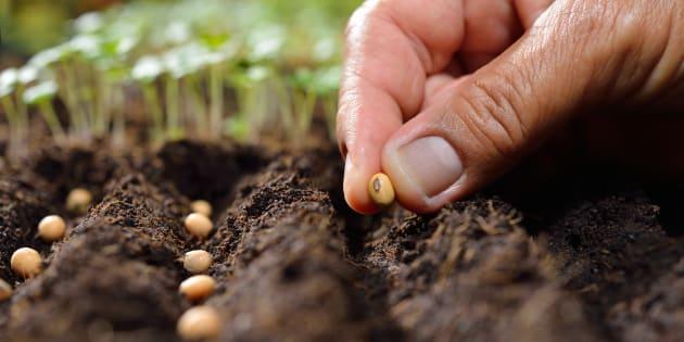 Pour des semences reproductilbles en toute liberté