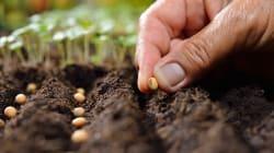 BLOG - Pour des semences reproductibles en toute