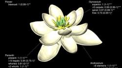 La toute première fleur était