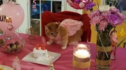 Beloved Elderly Cat Gets Huge Party To Celebrate Her 15th