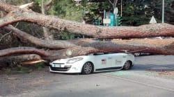 Roma, crolla pino e centra in pieno un taxi (e altre