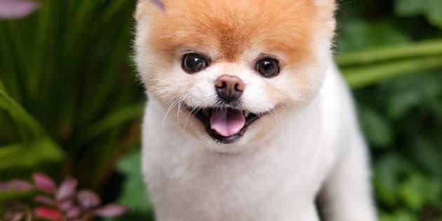 Boo, le chien