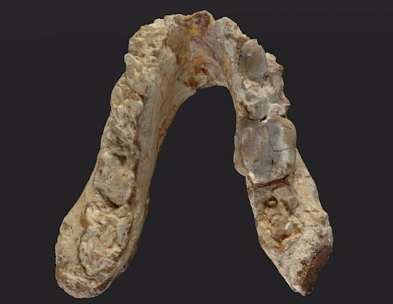 Fossils in Europe add layer to human origin debate