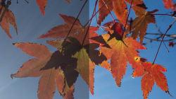 スマホで秋の紅葉をキレイに撮るとっておきの方法は?