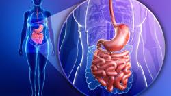 C'est dans votre flore intestinale que se trouve la clé de l'efficacité ou non de certains traitements