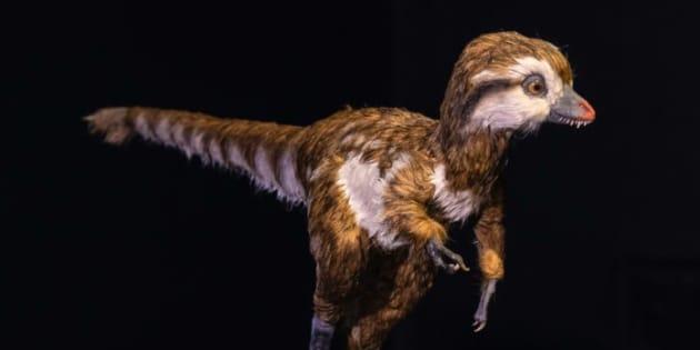 Un tyrannosaure âgé de quelques semaines, modélisé par le Muséum d'Histoire Naturelle de New-York.