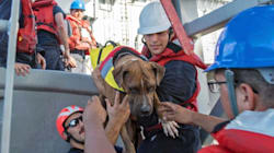 American Sailors And Their Dogs Saved After Five Months At