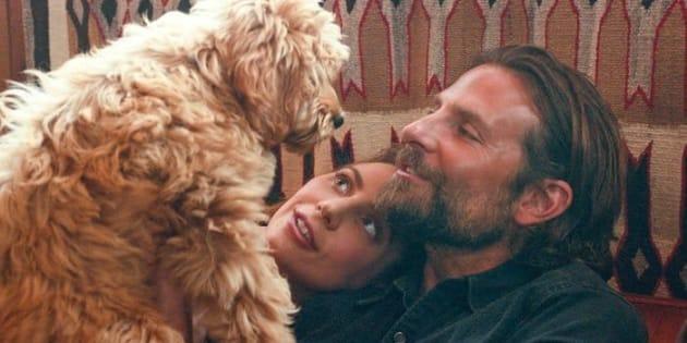 """Le chien Charlie entouré Bradley Cooper et Lady Gaga dans le film """"A Star Is Born""""."""
