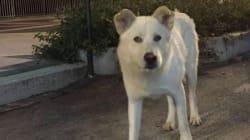 Un anno e quattro mesi di reclusione per aver torturato e ucciso il cane