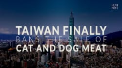 Taiwan Finally Bans The Sale Of Dog And Cat