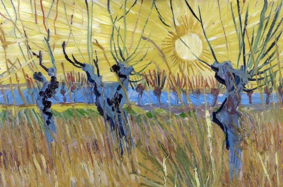 Mostra, Van Gogh: Gelsi potati al tramonto, 1888