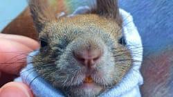 Cet écureuil trouvé sous un arbre a la belle