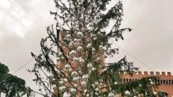 Spelacchio, l'albero di Natale più coerente del