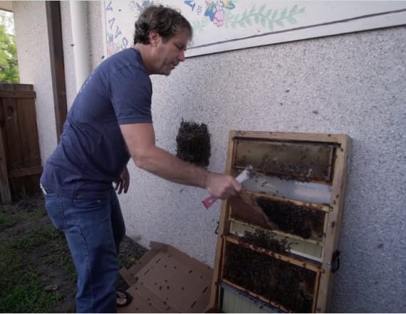 Ted Dennard is a modern day bee whisperer