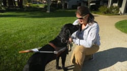 This Is What It's Like To Train Dogs To Guide Blind And Visually Impaired