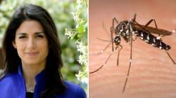 La Raggi vieta di uccidere le zanzare? È