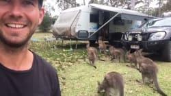 Quand les kangourous ont faim, ils font la queue comme tout le
