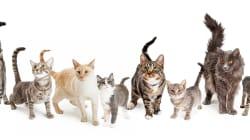 猫40匹を虐待容疑、飼い主の姉妹を書類送検へ
