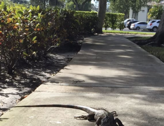 Florida residents confused by odd weather advisory