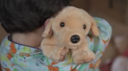 VIDEO: ¿Por qué las mascotas no son un regalo de