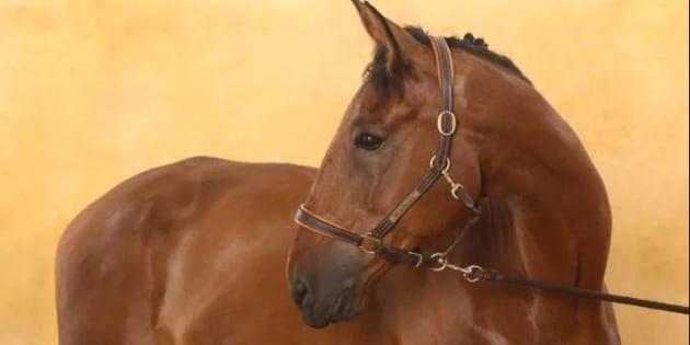 Douze chevaux sauvés de l'abattoir grâce à une mobilisation sur les réseaux sociaux.