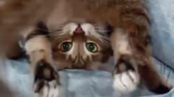 La flexibilidad de este gato te dejará sin